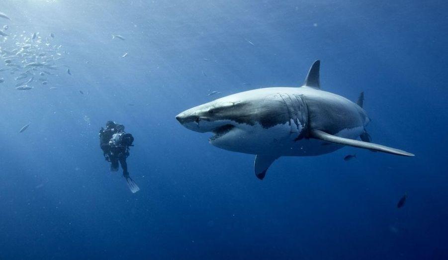 Dans son nouveau film sur les fonds marins, Jacques Perrin émerveille et éveille les consciences.