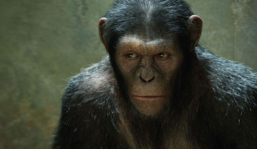 Un singe aux capacités cérébrales décuplée mène la révolte des primates sur la planète Terre.