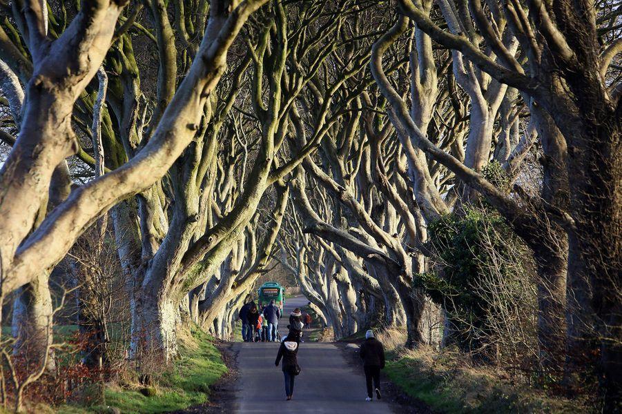 La forêt de Dark Hedges, en Irlande du Nord