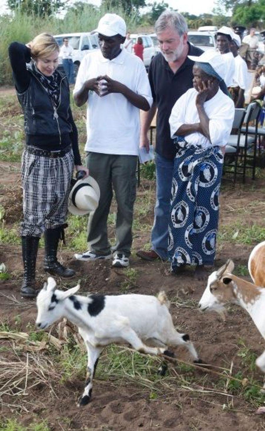 Chèvres et star