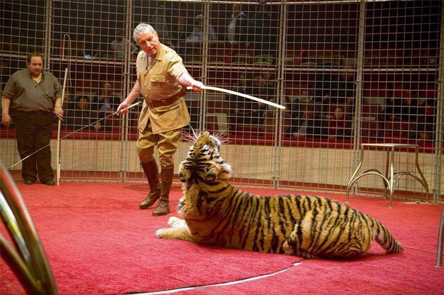 Le chanteur affronte une tigresse qui énerve ses congénères dans son dos...