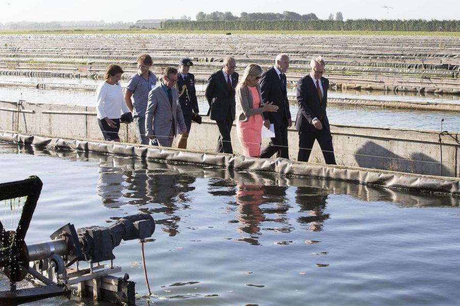 La reine Maxima des Pays-Bas en Zélande, le 9 septembre 2016