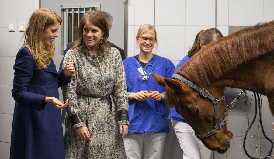 Avec Billy the Horse, à la clinique équine de l'université vétérinaire d'Hanovre
