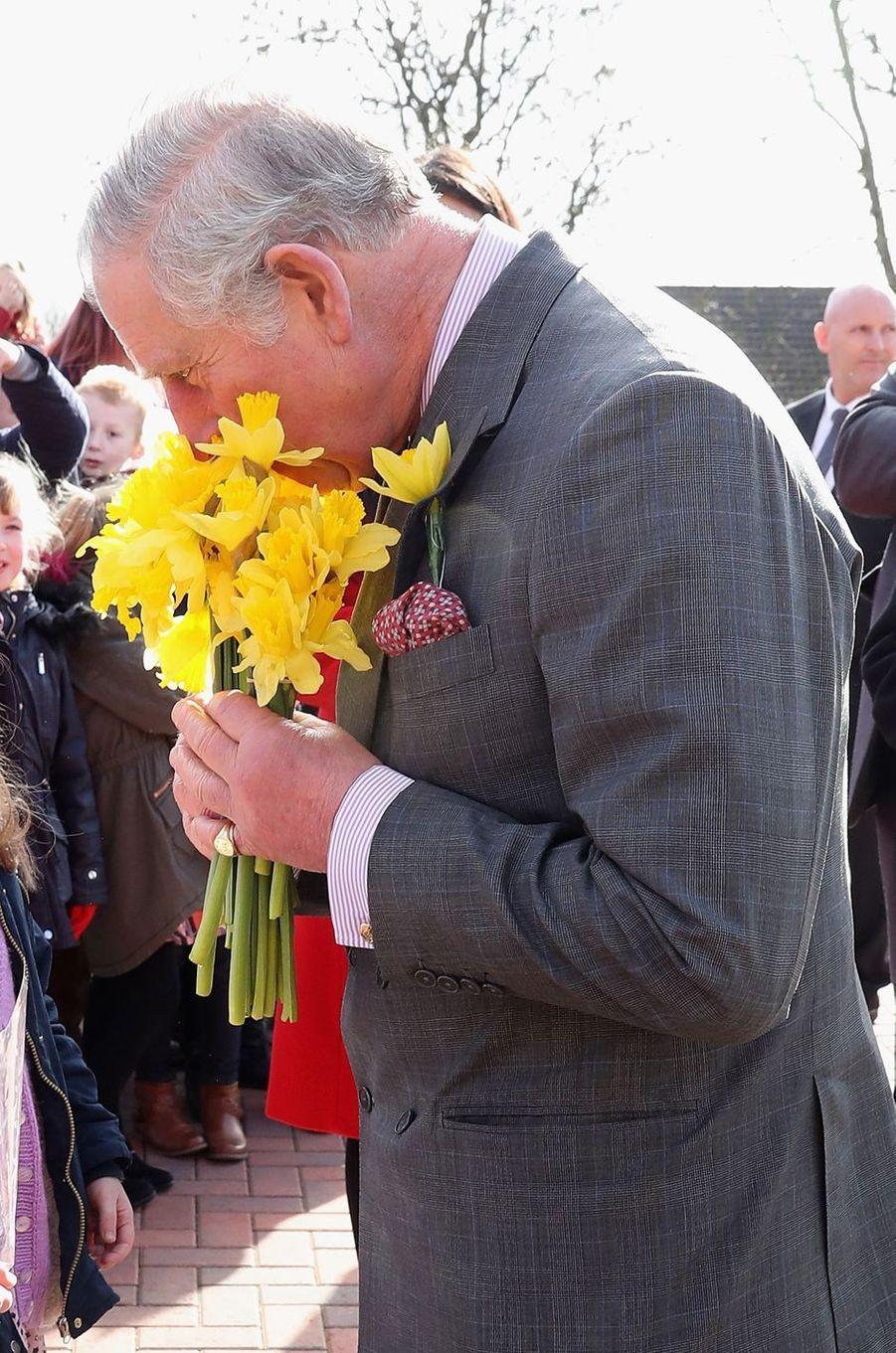 Le prince Charles le nez dans des jonquilles à Cwmbran, le 24 février 2017