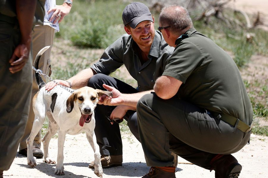 Le prince Harry dans le Parc national Kruger en Afrique du Sud, le 2 décembre 2015