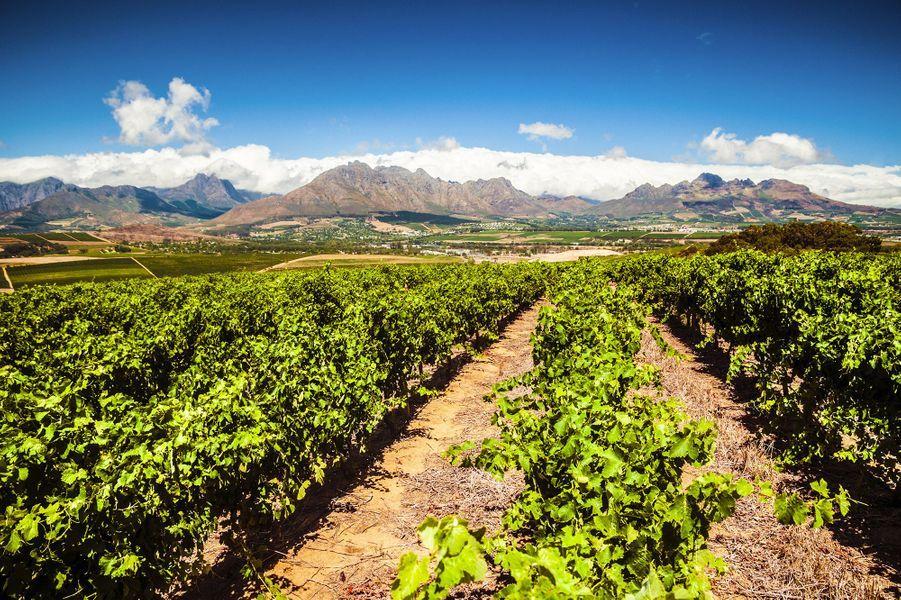 Stellenbosch, Afrique-du-Sud