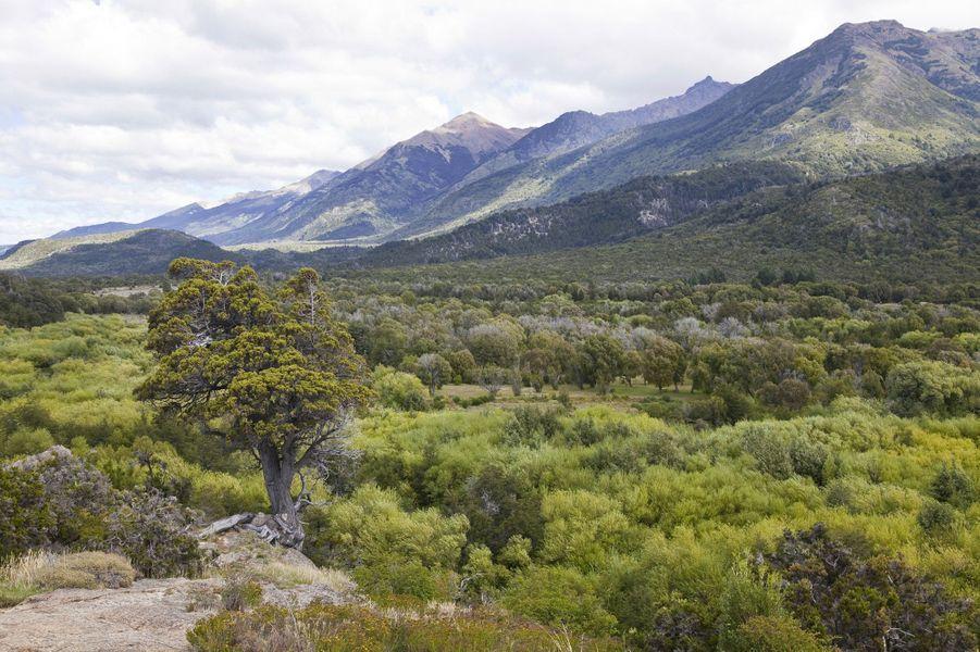 Le parc national Los Alerces(Argentine).
