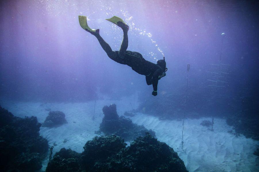 Plongée au large du GoldenEye.