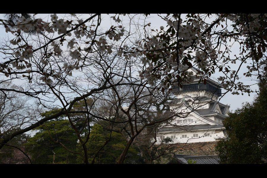 Sakura, l'autre Sacre du printemps