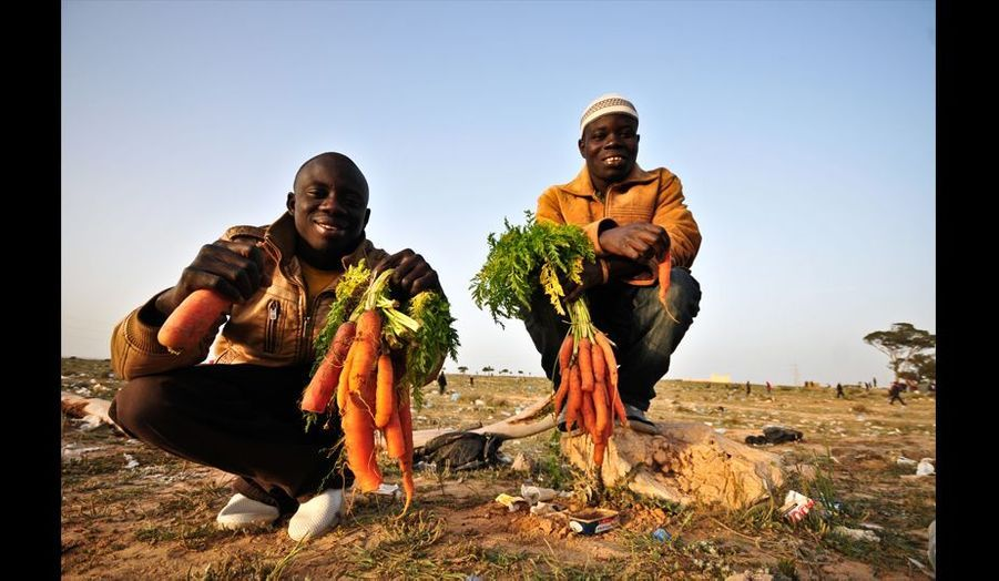 Ces réfugiés ont réussi a trouver des carottes qu'il mangent crues.