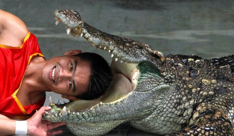 Un membre du Siracha Tiger Zoo près de Bangkok met sa tête dans la gueule ouverte d'un crocodile dans le cadre d'un show à l'attention des touristes.