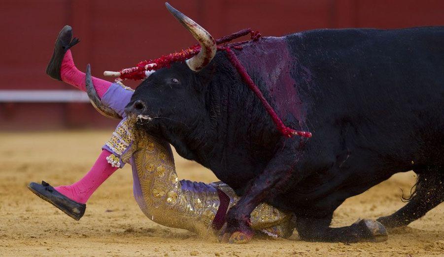 Le matador espagnol Antonio Nazare est violemment bousculé par un taureau lors d'une corrida dans les arènes de la Real Maestranza de Caballería à Séville.