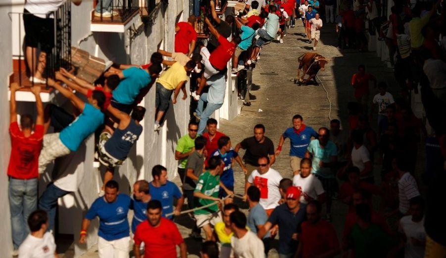 Les habitants de la ville de Grazalema, au sud de l'Espagne, s'agrippent aux fenêtres lors du traditionnel lâcher de taureaux du Toro de Cuerda Festival.