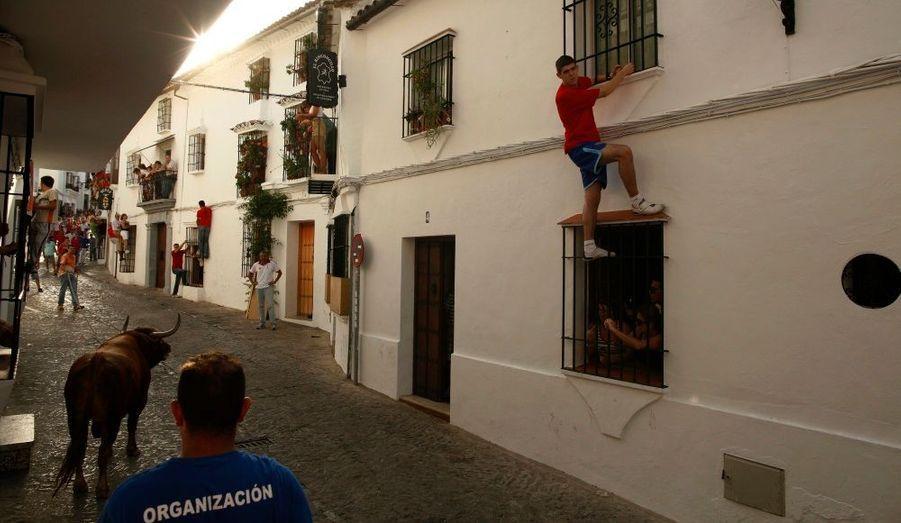"""Des personnes s'accrochent aux barreaux de fenêtres pour éviter un taureau durant la """"Toro de Cuerda"""", le festival annuel de la ville de Grazalema, au sud de l'Espagne. Le taureau, retenu par une corde, est amené à circuler dans les rues."""