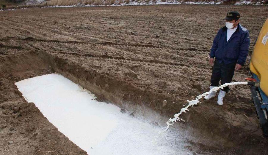 Un fermier japonais d'Iitate, dans la préfecture de Fukushima, se débarasse de son lait dans une fosse. Plusieurs aliments, dont le lait, ont été interdits à la vente en raison des risques de contamination radioactive après l'accident nucléaire à la centrale de Fukushima Dai-Ichi.