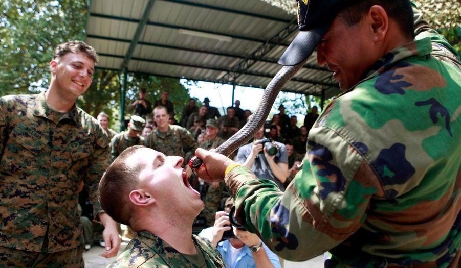 Pendant un entraînement de survie dans la jungle thaïlandaise, un marine de l'armée américaine boit du sang de cobra.