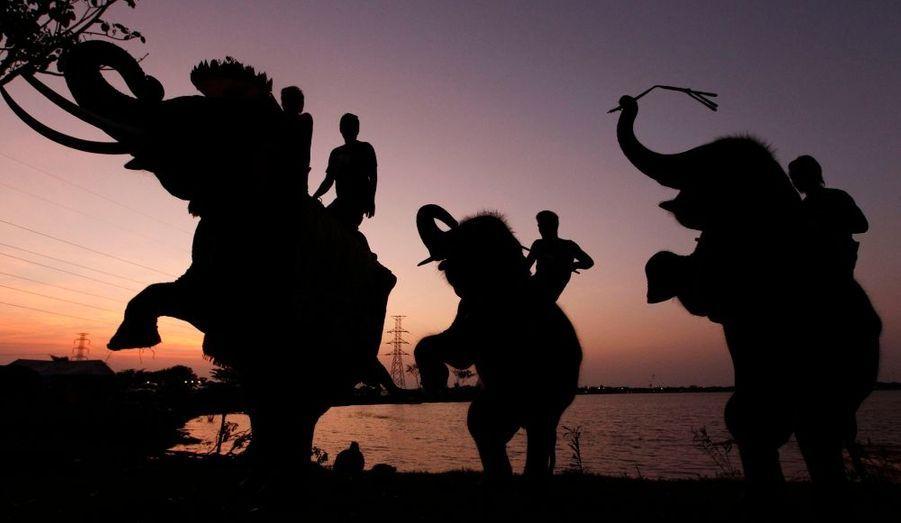 Des mahouts (dresseurs) thaïlandais montent des éléphants à l'occasion de la célébration annuelle du Loy Krathong dans la province Ayutthaya. Chaque année, les croyants déposent sur les eaux des rivières des krathong, de petits offrandes flottantes (Loy, flotter) en l'honneur de la déesse du cours d'eau. La province d'Ayutthayaa été durement touchée par les inondations qui ont frappé récemment touché la Thaïlande.