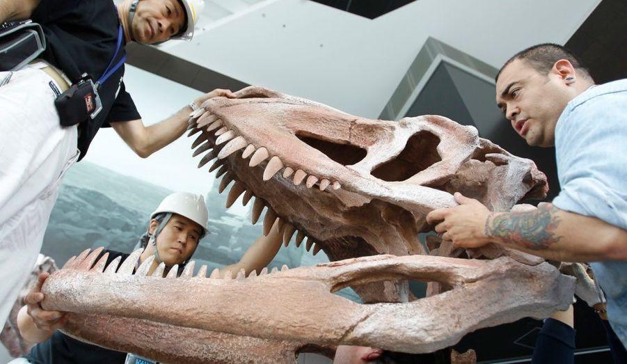 Le paléontologue argentin Abel Martinez (à droite) et des ouvriers japonais installent la réplique d'un crâne fossilisé de Fasolasuchus, un dinosaure long de 8 mètres, dans le hall du Roppongi Hills à Tokyo, pour l'exposition intitulée L'Aube des dinosaures dont l'inauguration est prévue le 10 juillet.