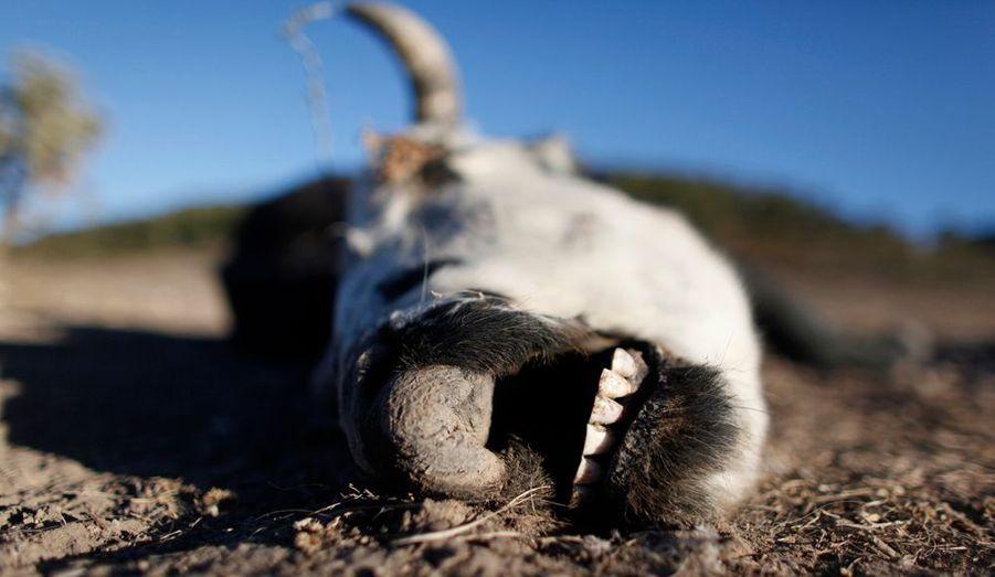 Un squelette animal retrouvé à San Isidro de Cienega dans l'Etat du Nuevo Leon. Le Mexique est en proie à une vague de sécheresse sans précédent qui touche 70% du territoire national.