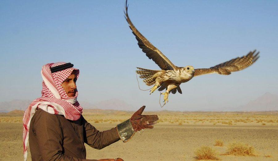 Un faucon prend son envol dans le désert de Tabouk, en Arabie Saoudite.