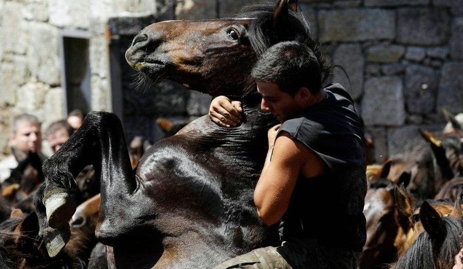 La Rapa das Bestas est une fête traditionnelle galicienne. Chaque été, les hommes de certains villages se rendent dans les montagnes pour rassembler des chevaux sauvages et les conduire dans un enclos pour leur couper les crins, les soigner si besoin et marquer les poulains. Le premier week-end du mois de juillet, les chevaux sauvages sont réunis dans différents villages espagnols de Galice où de nombreux repas collectifs sont organisés dans la journée. Des combats d'étalons peuvent être organisés. Les villageois en profitent aussi pour vendre ou acheter les chevaux.