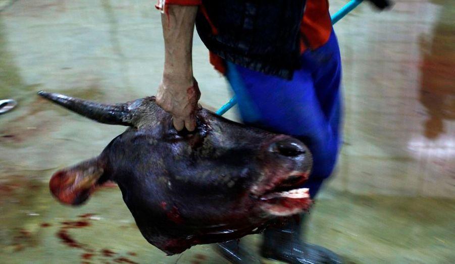 Un travailleur amène cette tête de vache à l'abattoir de Cakung, qui est le plus grand d'Indonésie.