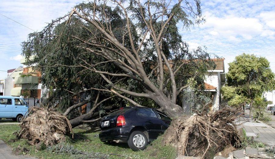 Une voiture s'est retrouvée prise au piège sous un arbre déraciné après une violente tempête à Buenos Aires. Selon les autorités, ces intempéries auraient déjà fait treize morts.