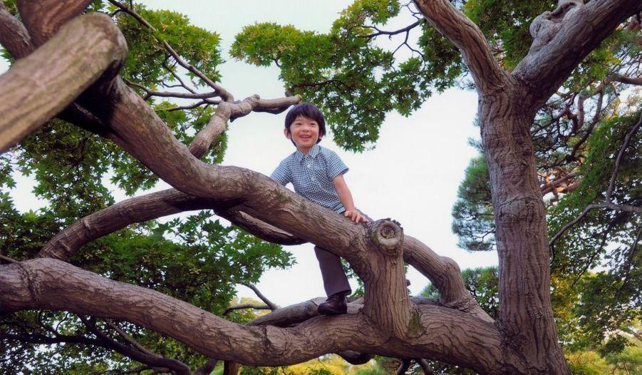 Le prince japonais Hisahito a fêté aujourd'hui son cinquième anniversaire.En pleine forme, il a été photographié le 10 août dernier alors qu'il grimpait un arbre dans la résidence impériale d'Akasaka à Tokyo.