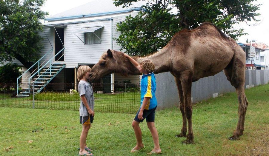 Ces enfants jouent avec un chameau dans un quartier épargné par les eaux dans le Queensland, en Australie. Des inondations sont à l'origine de dégâts catastrophiques dans cet État, où la plupart des mines de charbon qui alimentent l'Asie ont dû cesser leur activité.