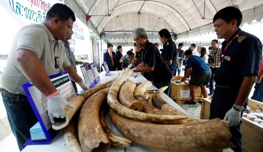 Les douanes thaïlandais ont effectué une saisie-record de 73 défenses d'éléphant, venues du Mozambique, à l'aéroport de Bangkok. Leur valeur atteignerait les 300000 euros.