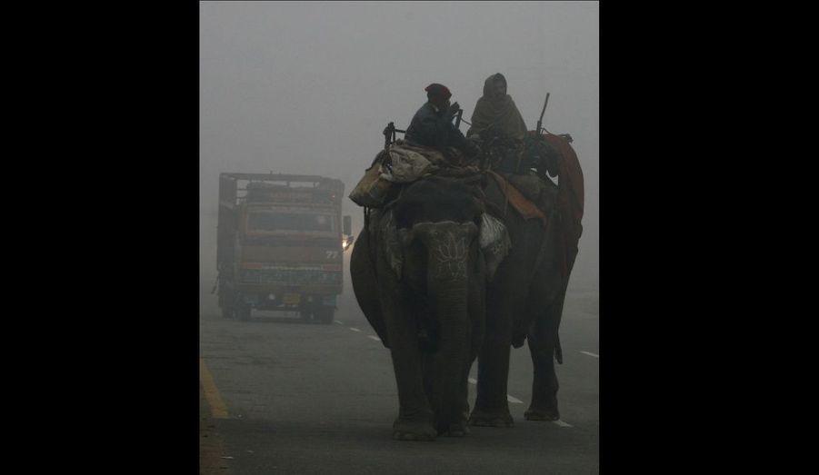 Ces hommes affrontent un épais brouillard à dos d'éléphant, par une froide matinée à New Delhi. Les températures ont considérablement chuté dans cette région, entraînant la mort de deux personnes, selon les médias locaux.