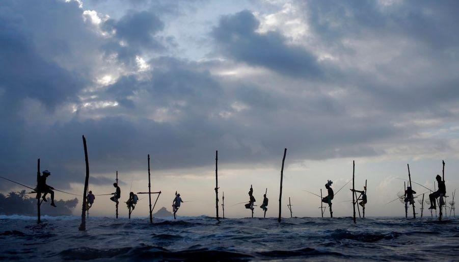 Des pêcheurs Sri Lankais utilisent une technique traditionnel transmise de génération en génération, à Ahangama, 112 km au Sud de Colombo.