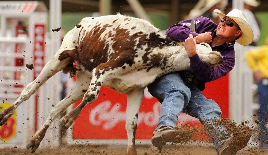 """L'as du rodéo Cody Cassidy lutte pour attraper une vache par les cornes, pendant le """"Steer Wrestling"""" de Calgary, dans la province canadienne de l'Alberta, le 11 juillet 2010."""