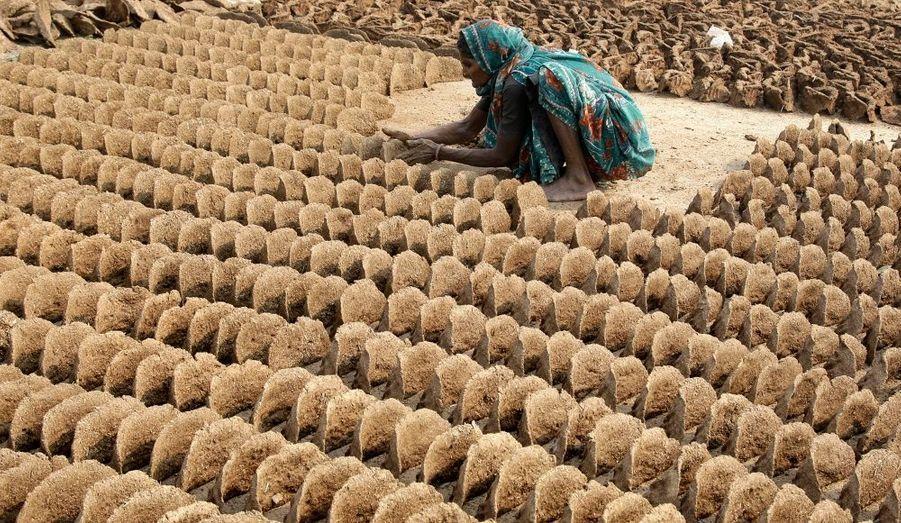 Des bouses de vache rassemblées par une femme dans le nord d'Allahabad, en Inde. Engrais naturel, il est utilisé dans le pays comme combustible pour la cuisine.