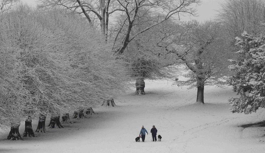 Des britanniques promènent leurs chiens à Lyme Park, près de Manchester.