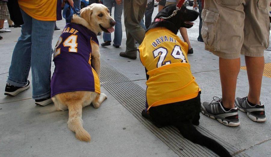 Deux fans des Lakers ont mis à leur chien respectif un tee-shirt à l'effigie de leur équipe. Los Angeles s'est imposée hier face aux Celtics.