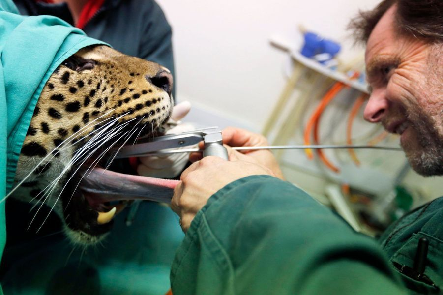 Thierry Petit, dentiste es animaux