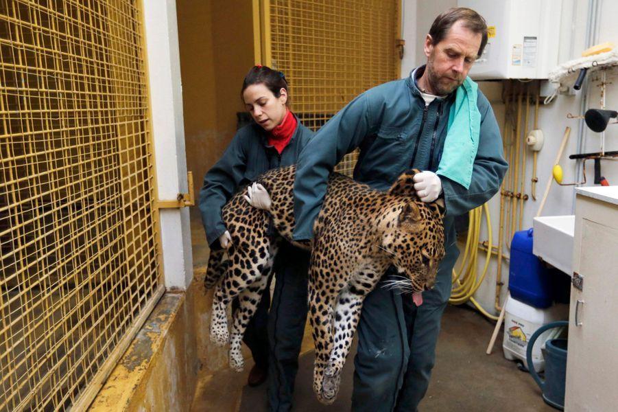 Thierry Petit, le vétérinaire du zoo