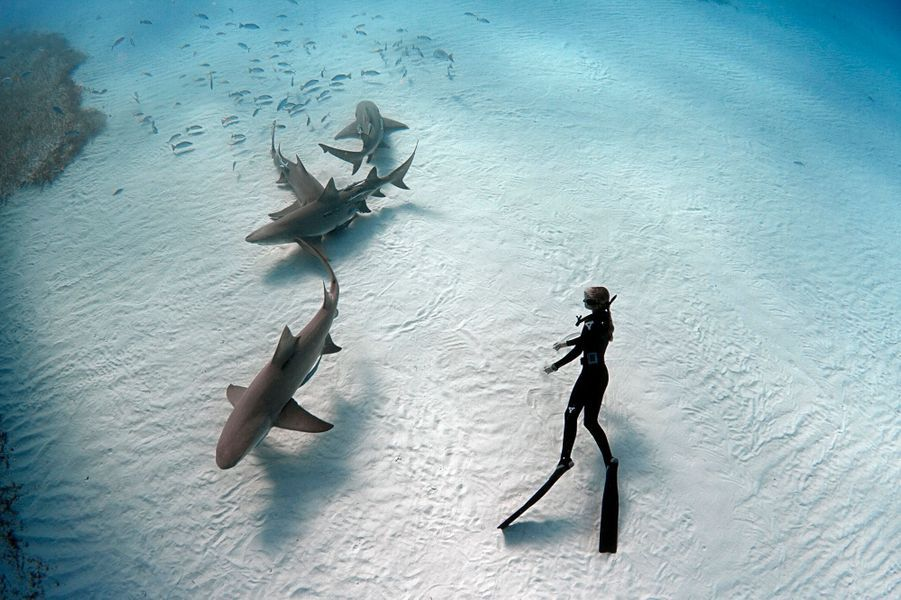 Danse avec les dents de la mer