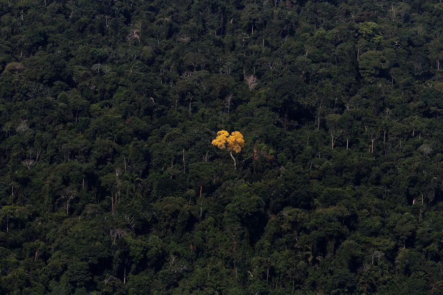 L'Amazonie étouffe