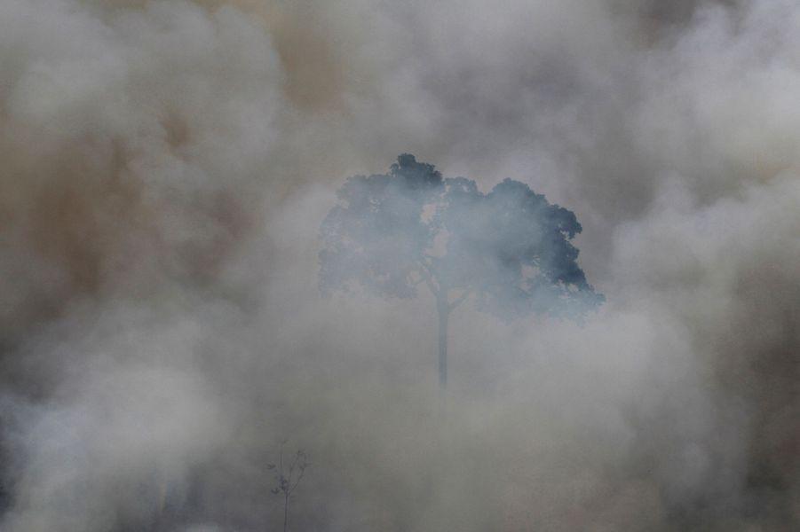 Selon les statistiques publiées jeudi par le gouvernement brésilien, la déforestation en Amazonie a progressé de près d'un tiers en un an. Les données satellite enregistrées par l'agence spatiale du Brésil dans les douze mois à fin juillet montrent que le défrichement a grimpé de 28% par rapport à l'année précédente, représentant une surface de 5 843 km2.