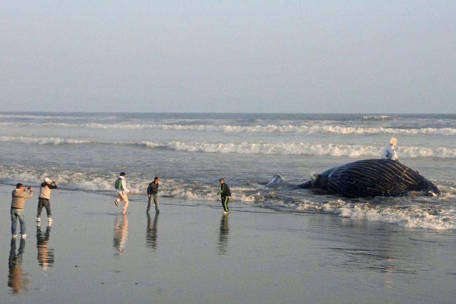 Une baleine échouée au Pérou en en 2013