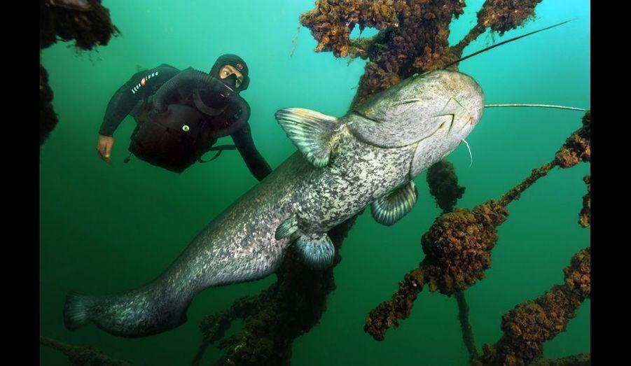 Ce poisson est difficile à approcher. Laurent Ballesta y est parvenu grâce au scaphandre militaire ultra-silencieux d'Aqualung.