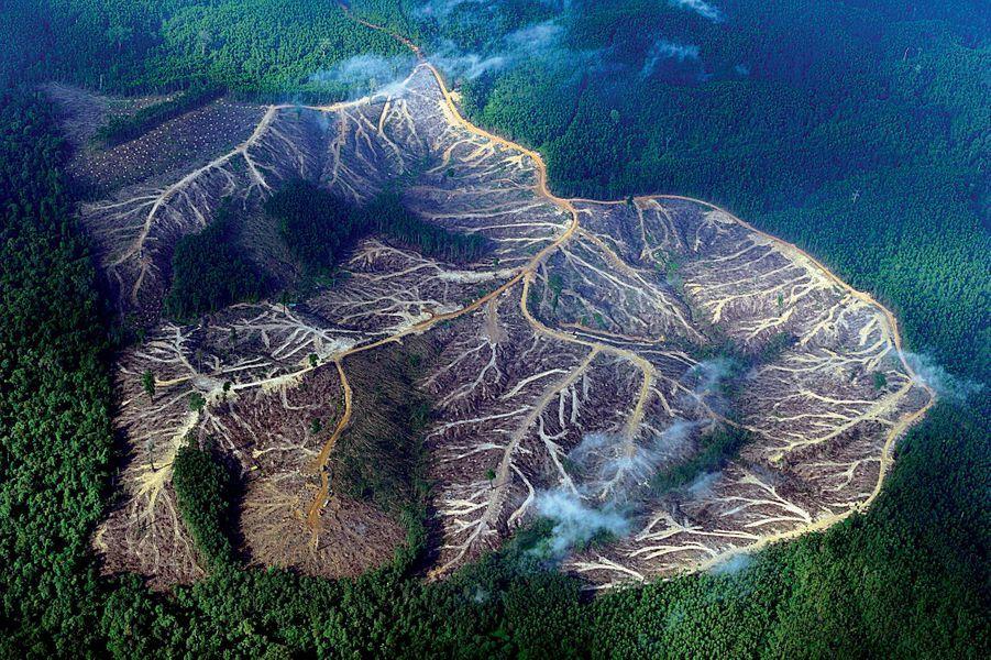 Vue aérienne des montagnes, jadis entièrement boisées, de la province de Jambi, à Sumatra. La déforestation dans le monde est responsable de 20 % des émissions annuelles de gaz à effet de serre.Des poumons…malades. Nécrosés par le défrichement, tailladés par les routes qui emportent les arbres et, avec eux, la bonne santé de la Terre. Les forêts absorbent près de la moitié des dioxydes de carbone émis par les activités humaines. Or chaque année, entre 13 et 15 millions d'hectares, soit un quart de la superficie de la France, disparaissent. En cause, l'expansion agricole, l'exploitation des mines, des hydrocarbures ou celle du bois. En Amazonie, la forêt cède la place aux champs de soja, destiné au bétail, ou de canne à sucre, pour la production de biocarburant… L'exploitation de l'huile de palme, la plus consommée au monde, fait de l'Indonésie la championne de la déforestation avec le Brésil. Les arbres sont les gardiens de la vie : 50 % des espèces végétales et animales se trouvent dans les forêts tropicales dont la moitié a déjà disparu.
