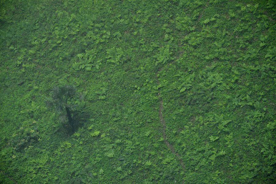 La doline a créé un écosystème naturel composé de plusieurs variétés de plantes.