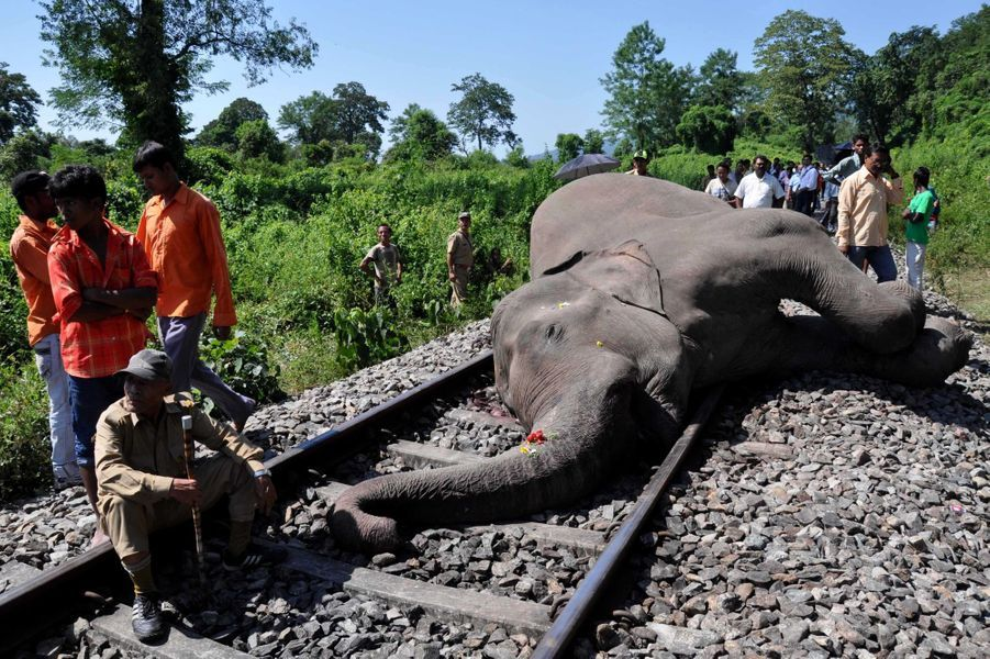 Un éléphant fauché par un train