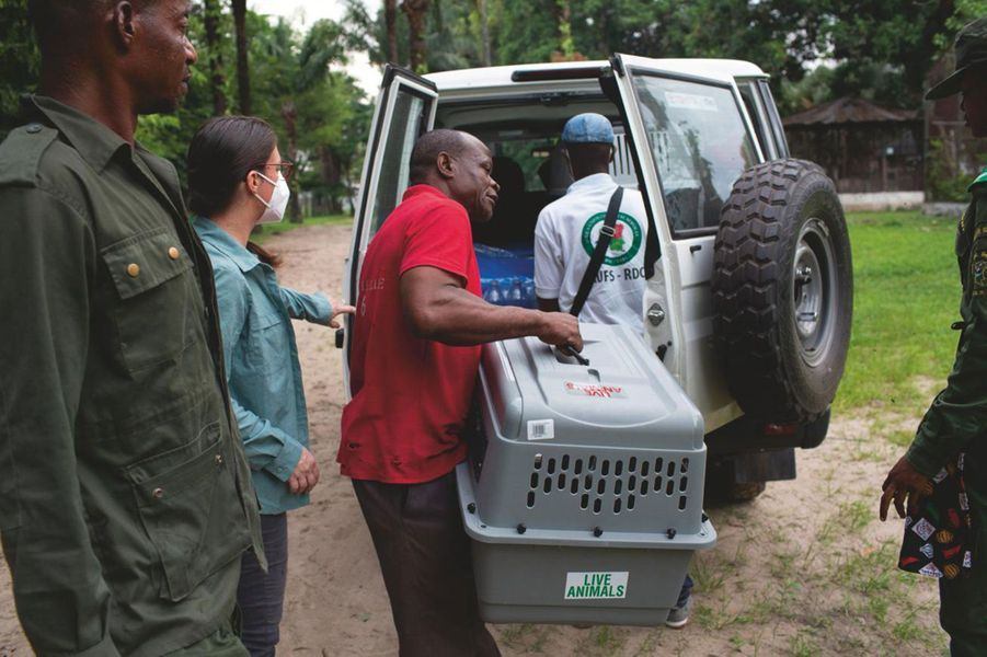 « Les employés du zoo m'aident à charger la cage de Naseka. Une longue route nous attend. »