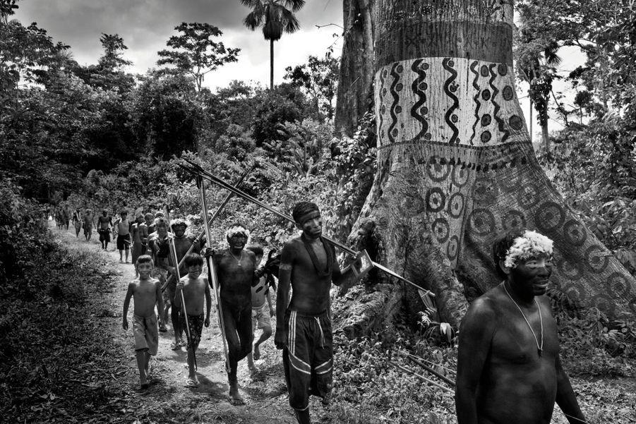 Ils ont marché cinq jours afin de rallier une cérémonie au village de Watoriki. Ici, le tronc d'un kapokier peint pour l'occasion.
