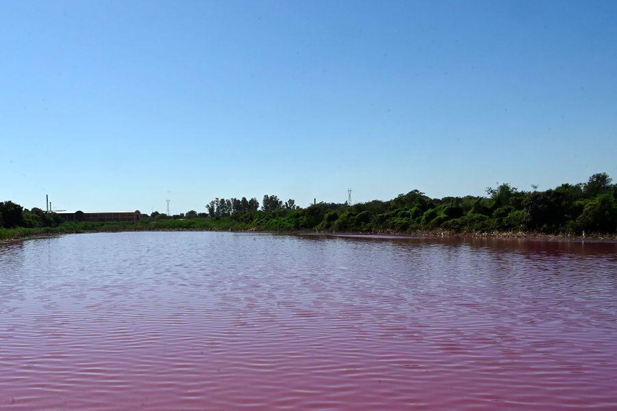 La lagune deCerro, à Limpio (Paraguay), a pris une couleur violette après qu'une tannerie brésilienne y a déversé des produits chimiques.