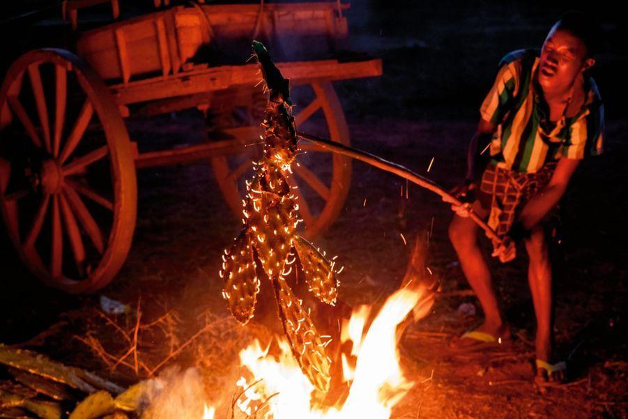 LES CACTUS. Ce villageois en brûle les épines..